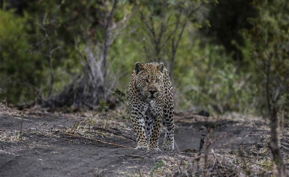 umkumbe sabi sands blog