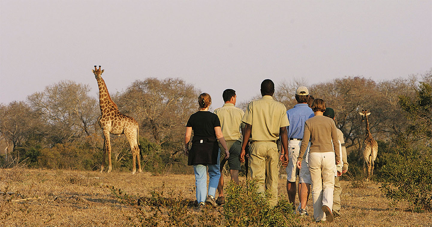 Explore Sabi Sands during a game walk when staying at Elephant Plains Lodge