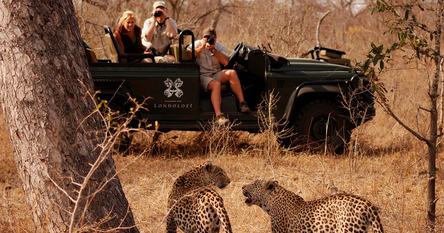 Explore South Africa during a game drive at Londolozi