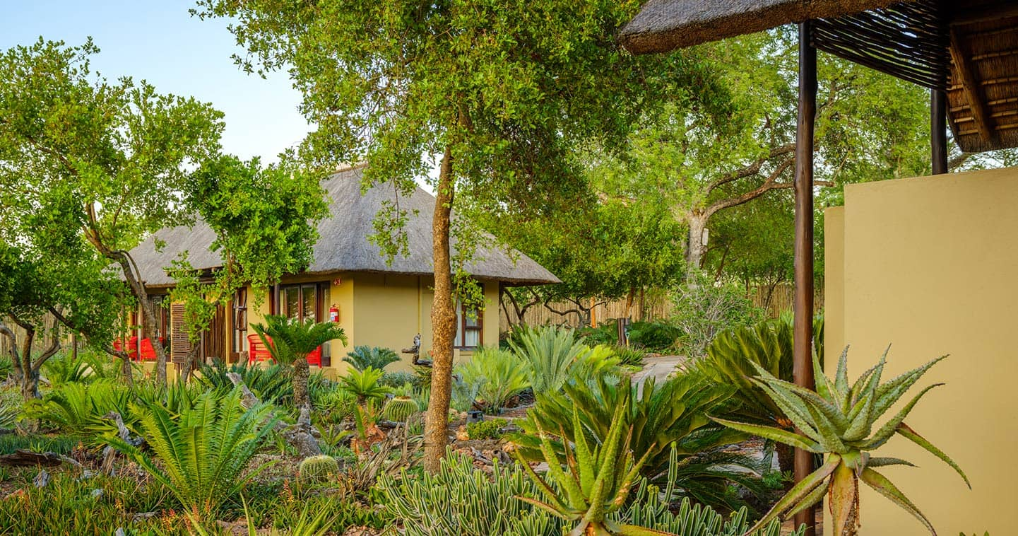 Sabi Sands lodge for groups and families - Jaci's Sabi House