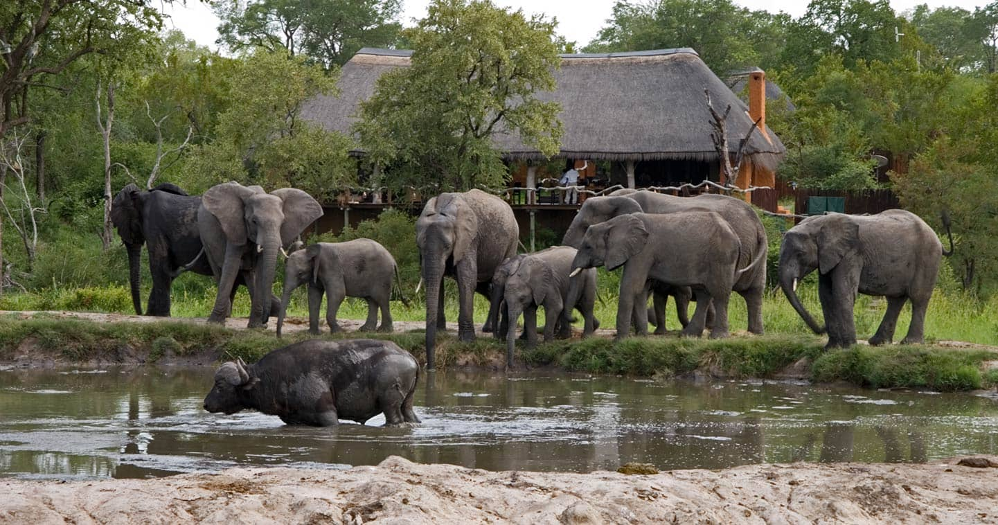 Simbambili Game Lodge is Sabi Sands