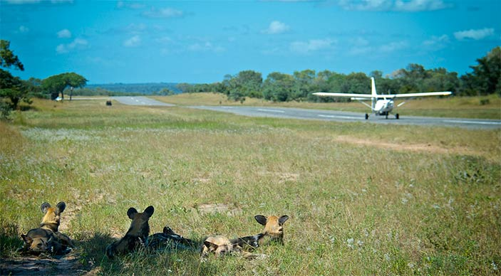 Special offer for Sabi Sabi in Sabi Sands - fly in package