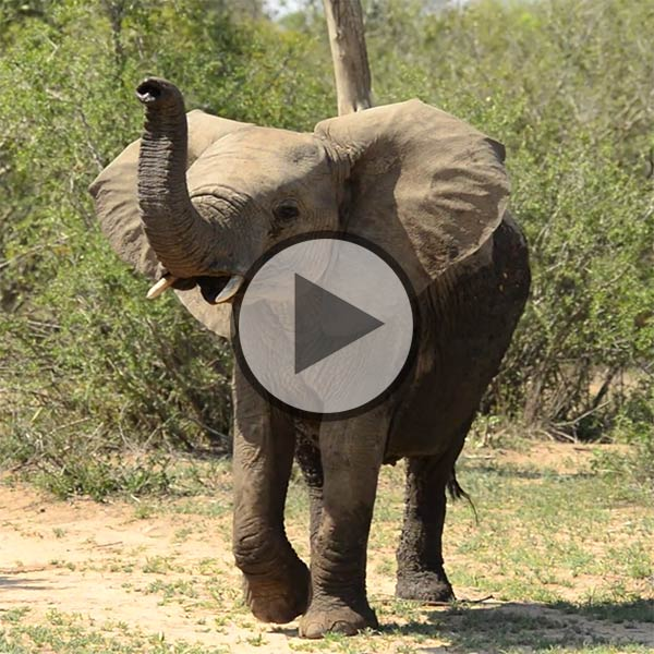 Elephant Plains video