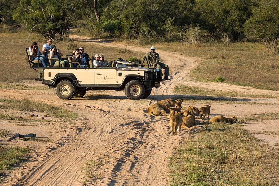 Chitwa Chitwa Sabi Sands blog June safari